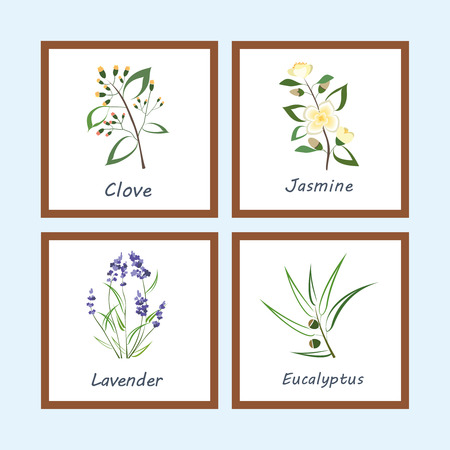 Collection of Herbs .