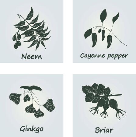 Collection of Ayurvedic Herbs.  Ginkgo, Cayenne pepper,Neem,Briar Иллюстрация
