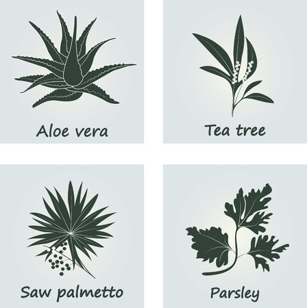 Collection of Herbs. Natural Supplements. Saw palmetto, Tea tree, Aloe vera, Parsley