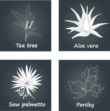 palmetto: Collection of Herbs. Natural Supplements. Saw palmetto, Tea tree, Aloe vera, Parsley