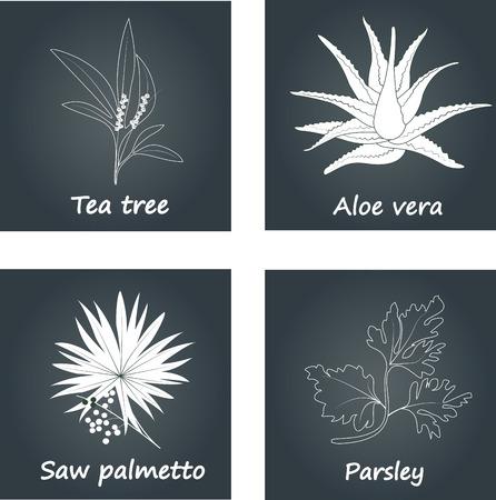 Het verzamelen van kruiden. Natuurlijke supplementen. Zaagpalmetto, Tea tree, Aloe vera, peterselie