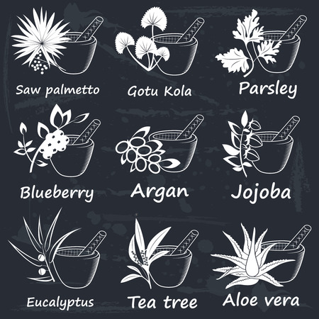 palmetto: Collection of Ayurvedic Herbs. Labels for Essential Oils and Natural Supplements