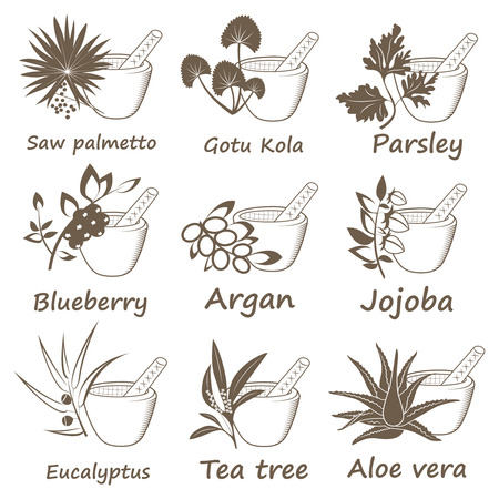Collection of Ayurvedic Herbs. Labels for Essential Oils and Natural Supplements