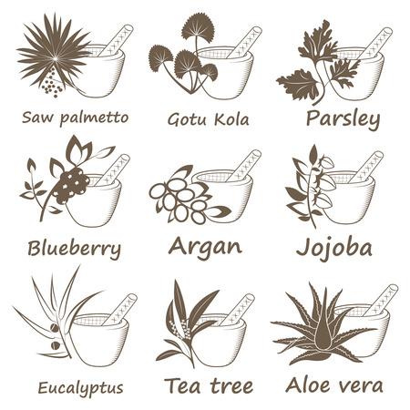 Sammlung von ayurvedischen Kräutern. Etiketten für ätherische Öle und natürliche Ergänzungen Vektorgrafik