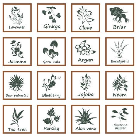 Het verzamelen van de ayurvedische kruiden. Labels voor essentiële oliën en natuurlijke supplementen Stock Illustratie