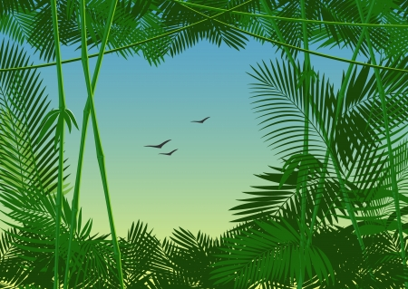 bamboo border: vector jungle forest