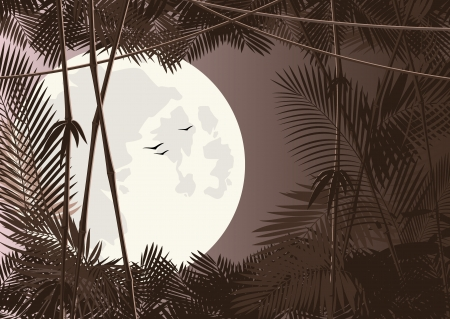 vector jungle forest in moon night Vector