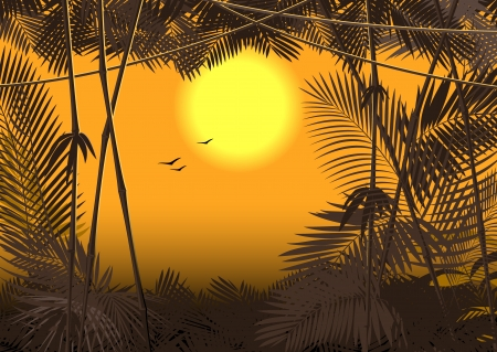 jungle forest sunset Stock Vector - 14953277
