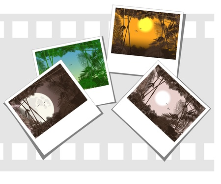 vector illustration of some photos depicting jungle forest Vector