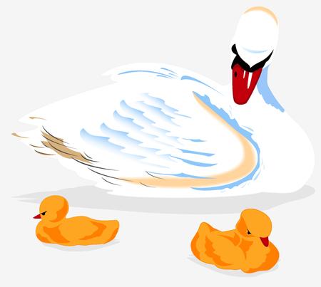 swan. vector illustration Illustration