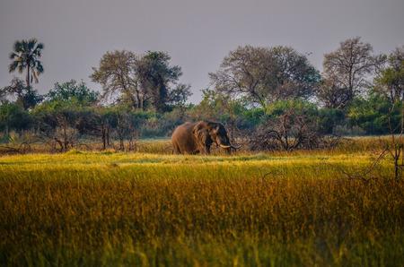 okavango delta: Okavango Delta