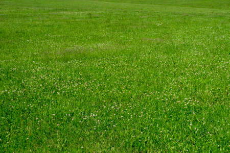 Juicy green grass in the summer meadow Stock Photo