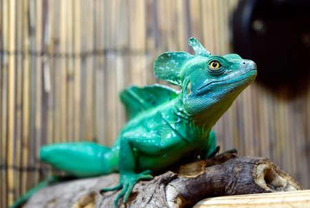 A green lizard on a tree limb