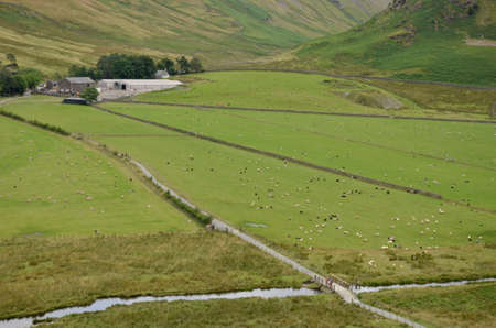Sheep farm, agriculture, Lake District National Park, UK