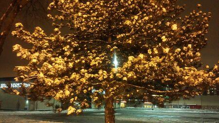 snow tree Reklamní fotografie