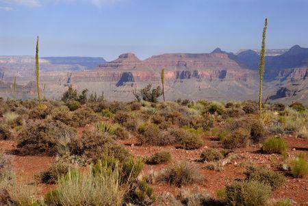 kaibab trail: Agave plant at Kaibab trail, Grand canyon