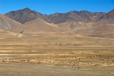 valley below: Yaks grazing in the valley below Karo La