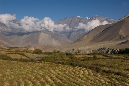 Fields in Khingar, in Jhong Khola valley, with Himalaya in the background photo