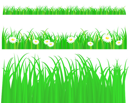 Green grass with daisy, pattern on white background Vector