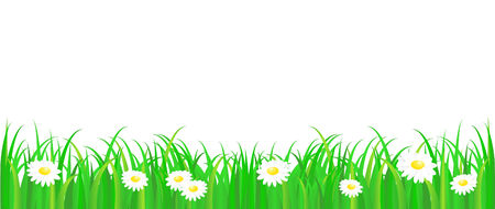 Green grass with daisy, vector pattern on white background Vector