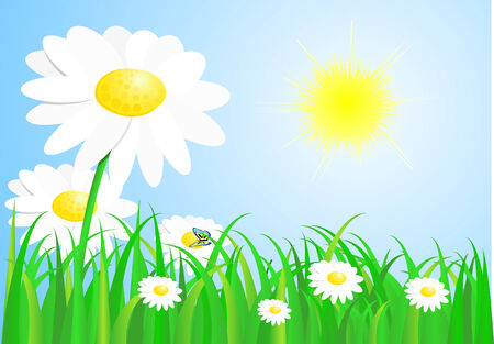 Spring beautiful meadow  Vector