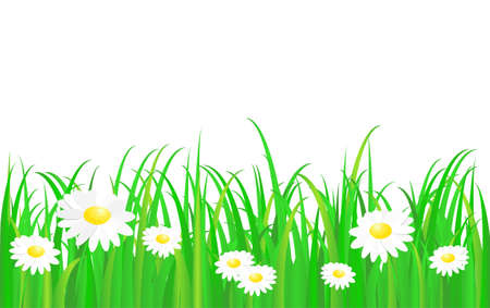 Green grass with daisy, vector pattern  Vector