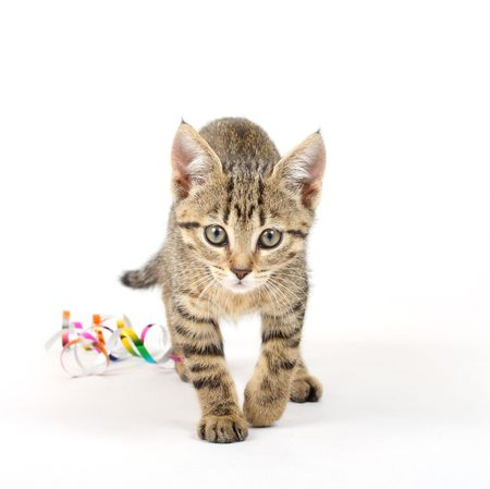 attention grabbing: Young cat