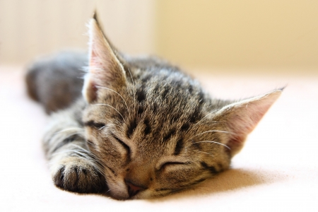 Sweet young cat sleeping on the bed Stock Photo - 5450728