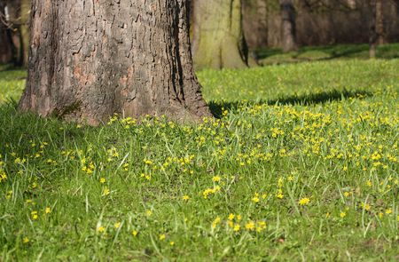 copse: Majestic old tree on green grass with flowers Stock Photo