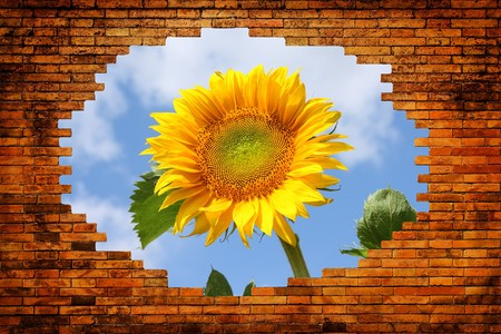 Hole in old brick wall with view on field with sunflower and blue sky photo