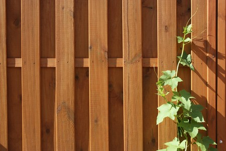 The new wooden fence and  the twined ivy photo