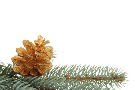 Background with branch and golden cone photo