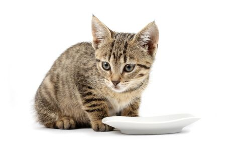 Young cat eating, cat with food cup, white background Stock Photo - 9353370