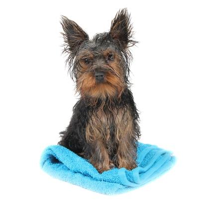 Wet dog photo