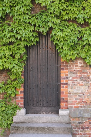 Old wooden door with ivy photo
