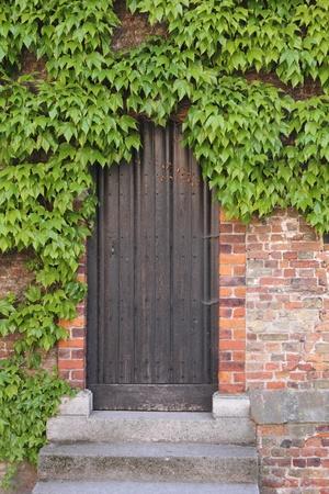 Old wooden door with ivy photo