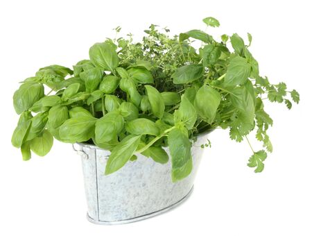 Assorted fresh herbs in buckets isolated on white background photo