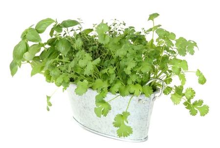 Fresh herbs in metal pot. photo
