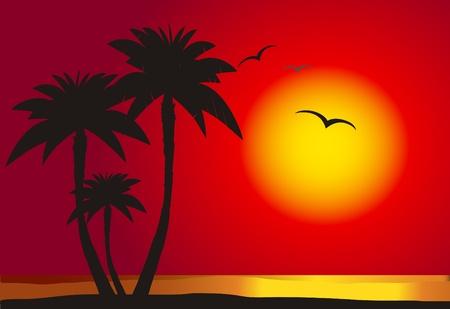 ¡rboles con pajaros: Puesta de sol en la playa con la silueta de la palma, el vector Vectores