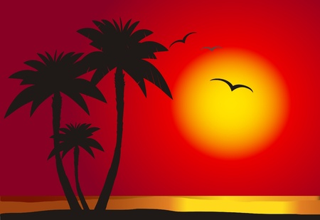Sunset on the beach with palm silhouette,  vector  Illustration