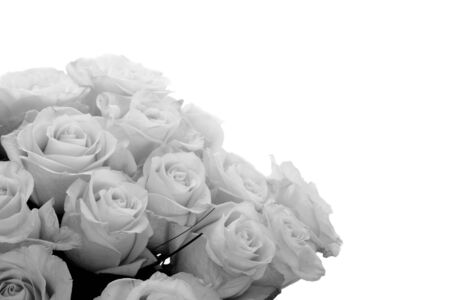 b and w: B w roses with copy space tor text