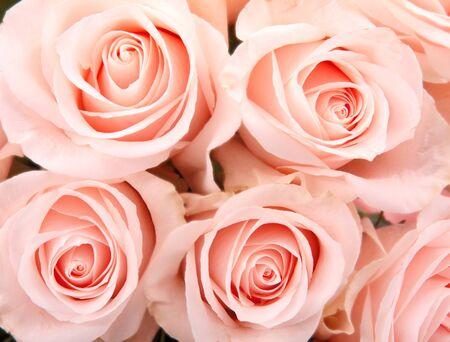 Roses background  photo