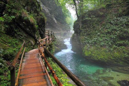 gorge: River in green forest in Canyon Vintgar, Triglav - Slovenia