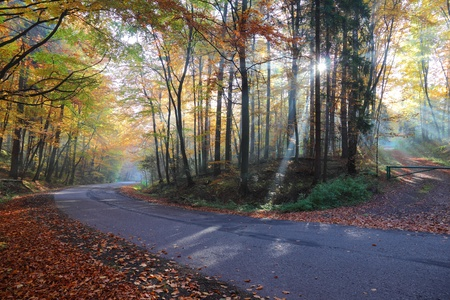 Autumn forest road in the woods, Poland , Ojcow, National Park  photo