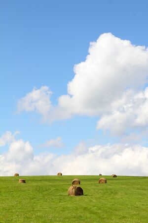 Summer field with  hay bales photo