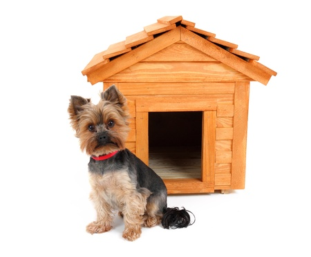 dog kennel: small wooden dog