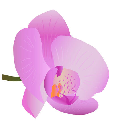 spa still life: Single orchid isolated on white background