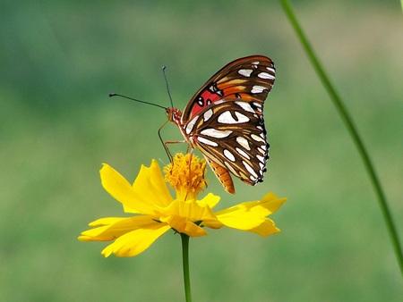 pollenation Stock Photo - 1439615