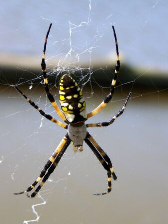 garden spider Banco de Imagens
