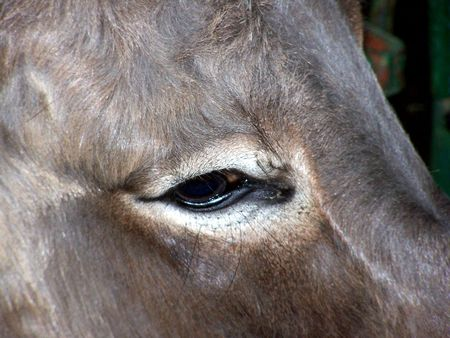 eye of ass
